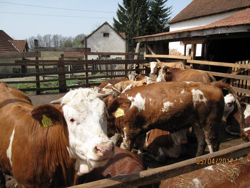 Краве