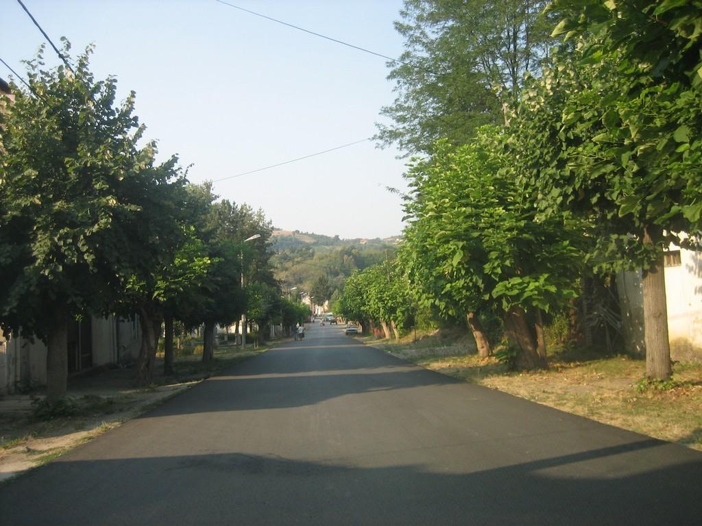 Главна улица са каталпама дрвећа